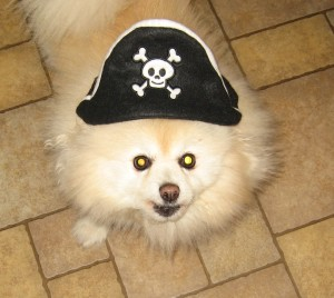 Kringles the pirate