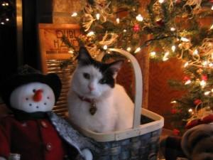 A little kitty basket!