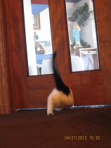"""This is Taco's back-end going through the """"mouse hole""""."""