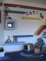 Inside the cat lounge.