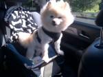 kringles in car seat