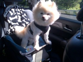 kringles in car seat
