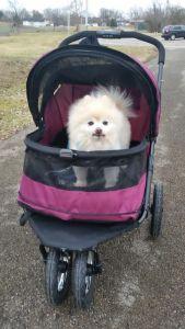 Pet Gear Stroller Review