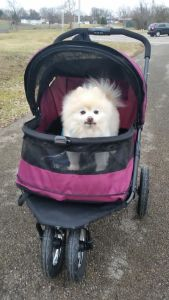 Pet Gear Stroller Review