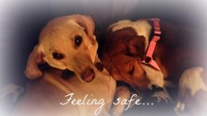 feeling-safe